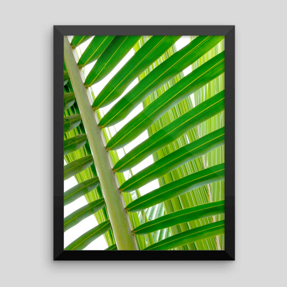 "Tropical Artwork: ""Coconut Palm"" (Framed photographic print)"